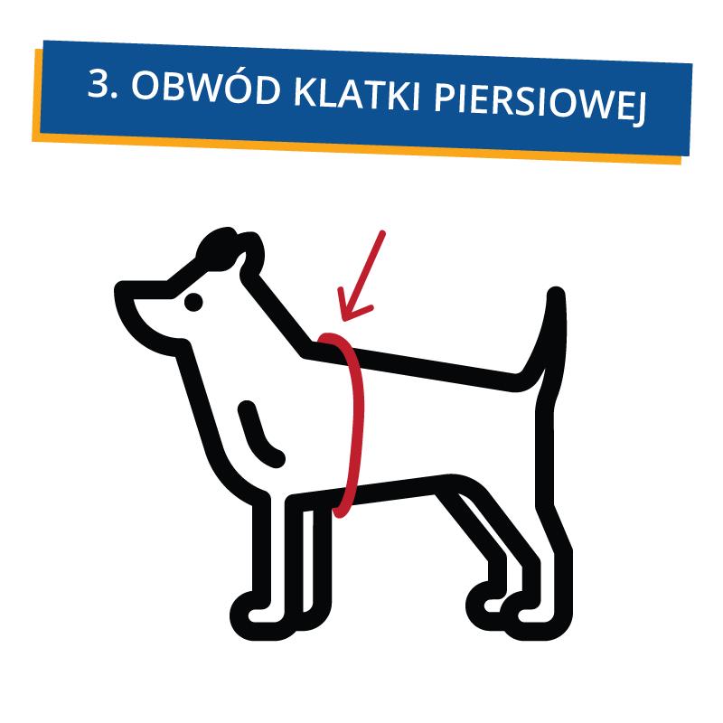 jak_zmierzyc_psa_3 Jak dobrać ubranko dla psa?